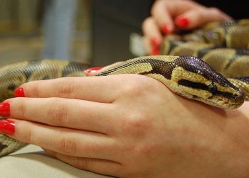 Новогодний маникюр со змеиным акцентом!