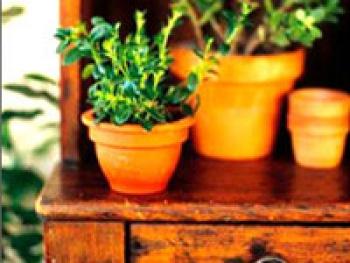 Использование цветов и комнатных растений в интерьере