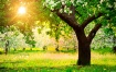Тесты на YouBeauty: Узнайте интересные подробности о себе всего лишь выбрав дерево!